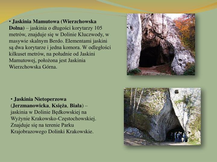 Jaskinia Mamutowa (Wierzchowska Dolna)