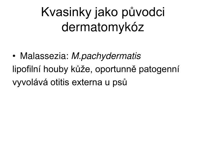 Kvasinky jako původci dermatomykóz