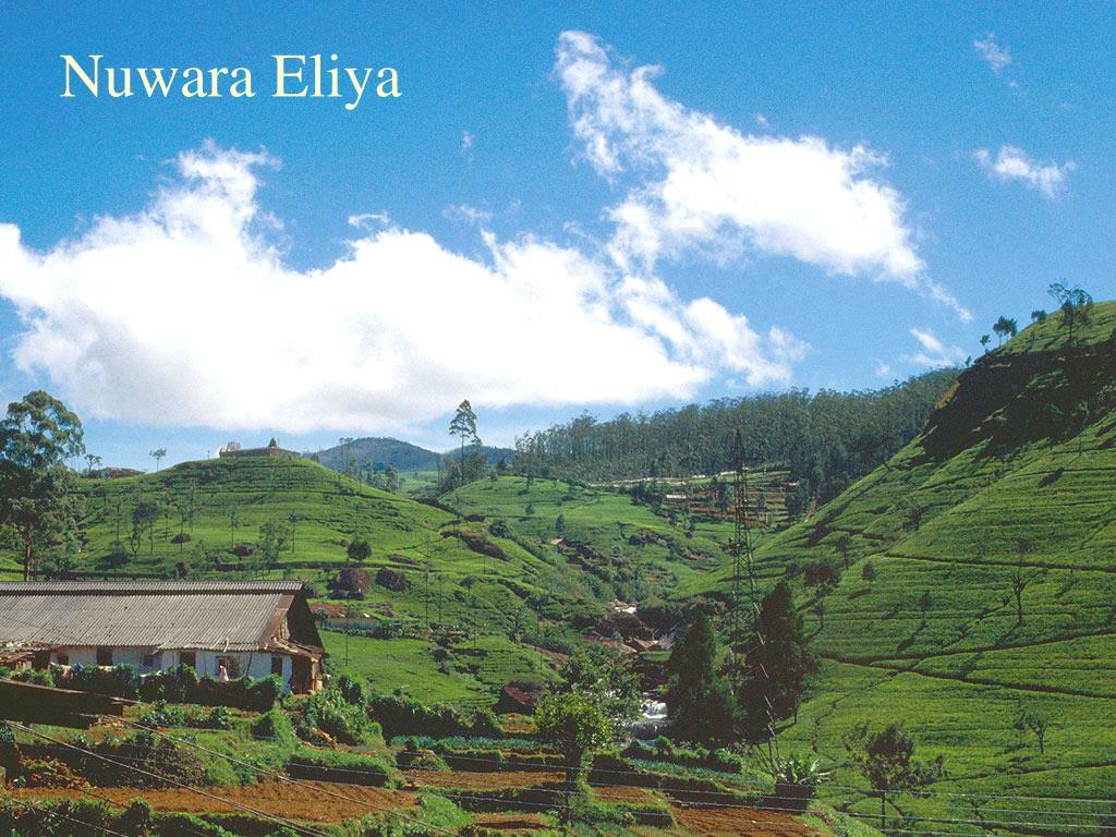 Nuwara Eliya