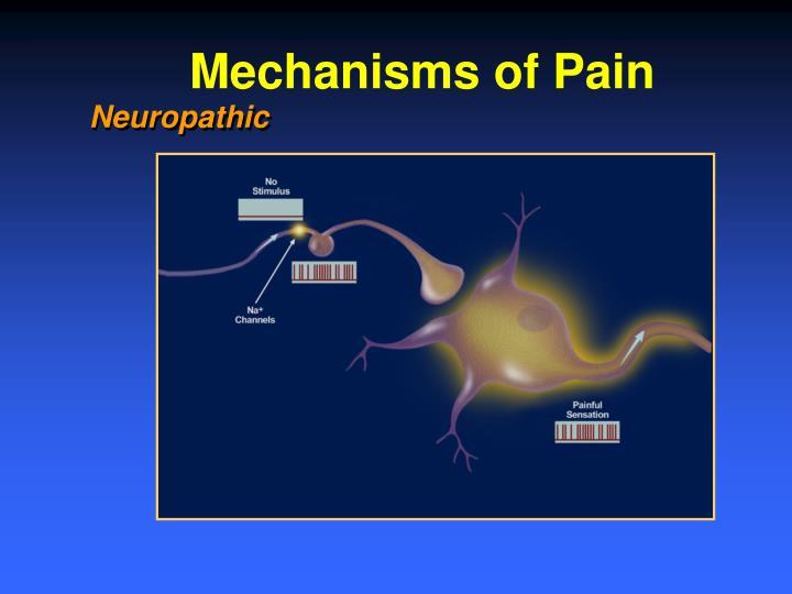 Mechanisms of Pain