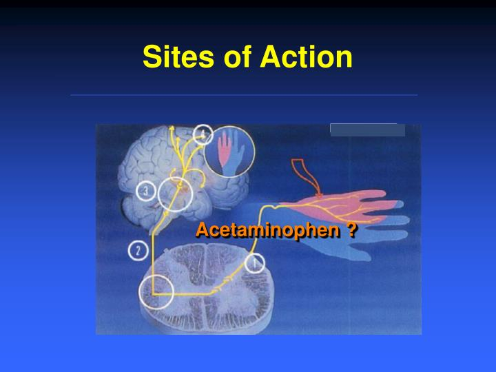 Sites of Action