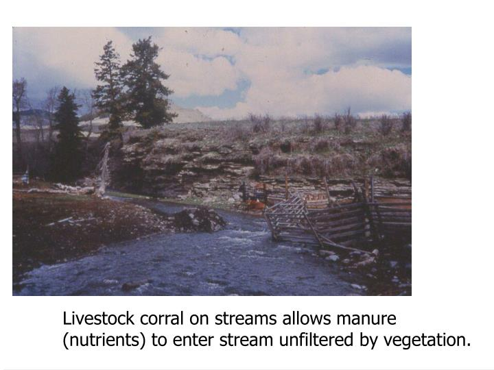 Livestock corral on streams allows manure