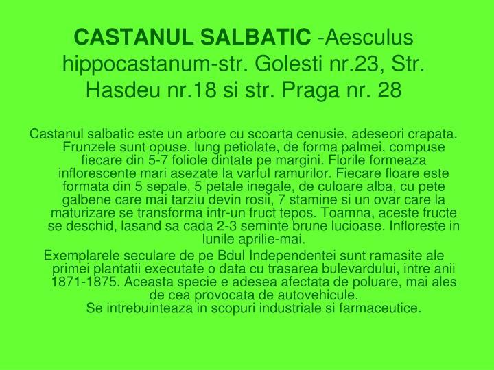 CASTANUL SALBATIC