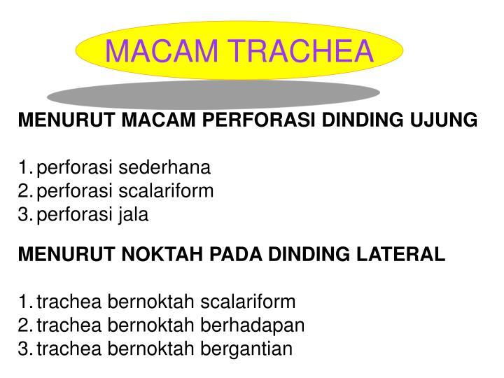 MACAM TRACHEA