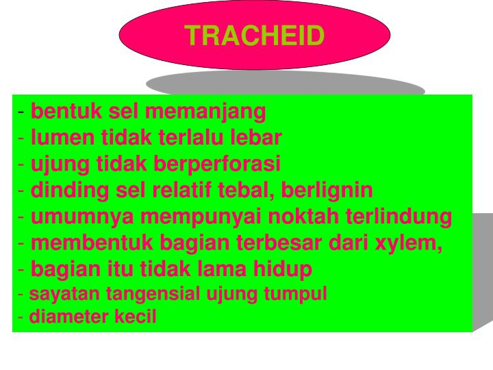 TRACHEID
