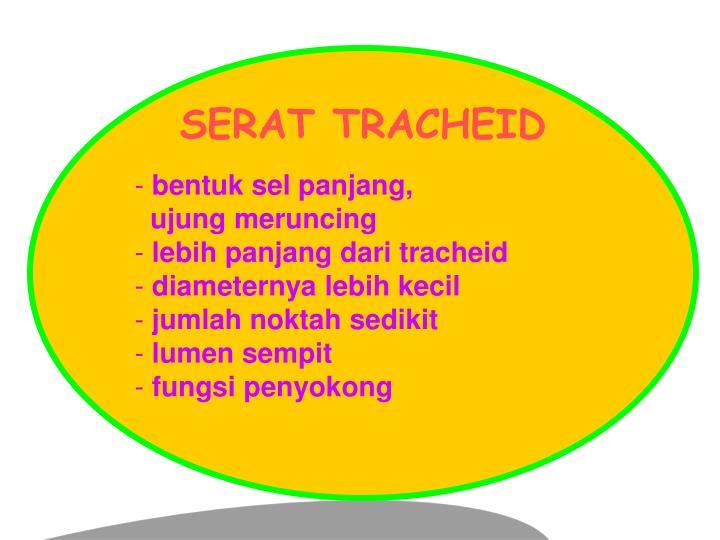 SERAT TRACHEID