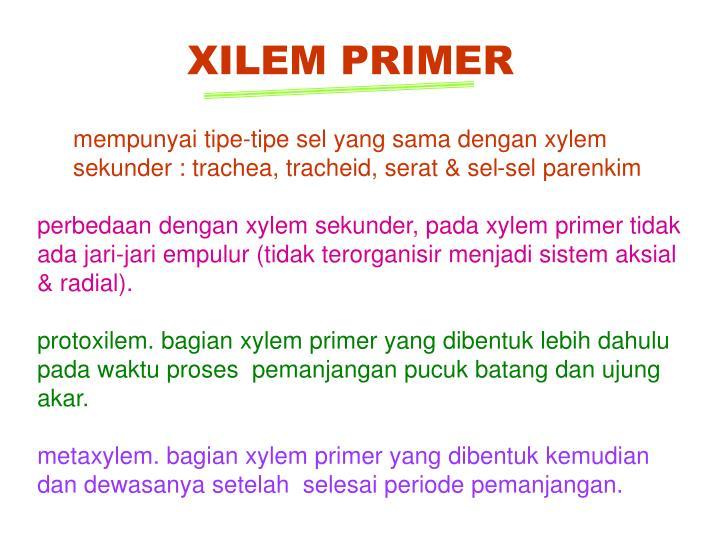XILEM PRIMER