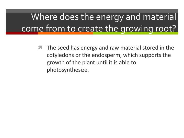 Where does the energy and material come from to create the growing root?