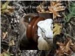burnish initial finish coat into call pot1