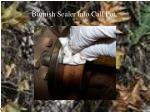 burnish sealer into call pot