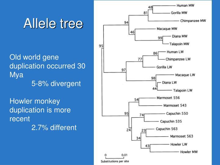 Allele tree