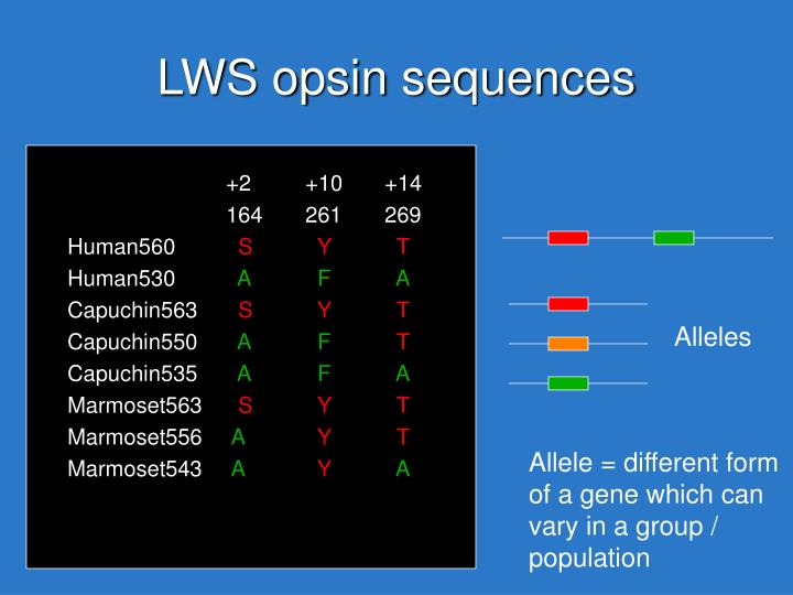 LWS opsin sequences