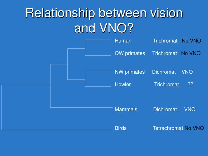 Relationship between vision and VNO?