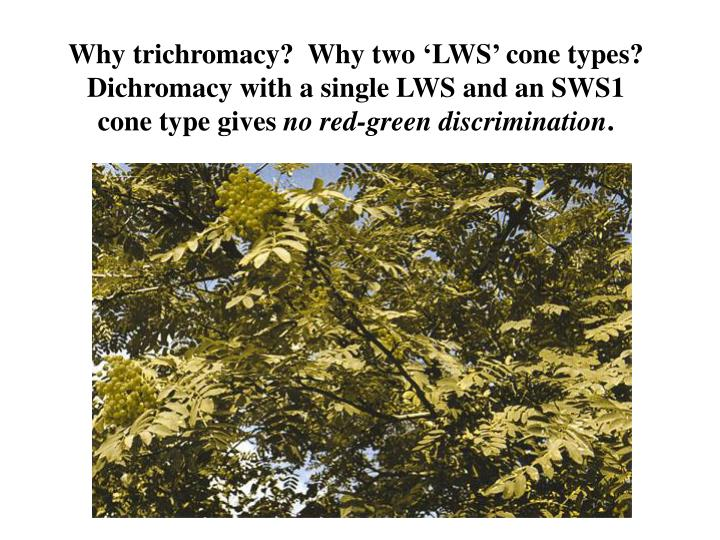 Why trichromacy?  Why two 'LWS' cone types?  Dichromacy with a single LWS and an SWS1 cone type gives