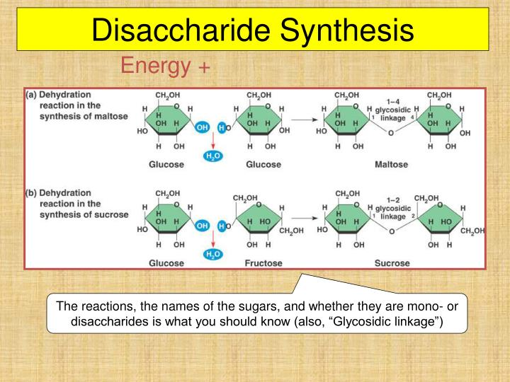 Disaccharide Synthesis