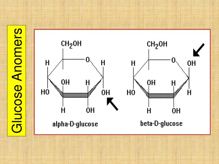 Glucose Anomers