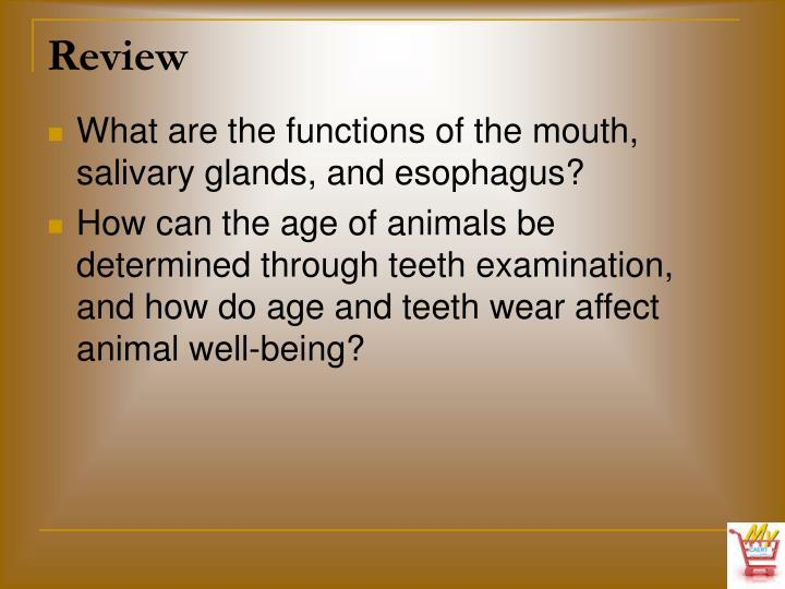 What are the functions of the mouth, salivary glands, and esophagus?