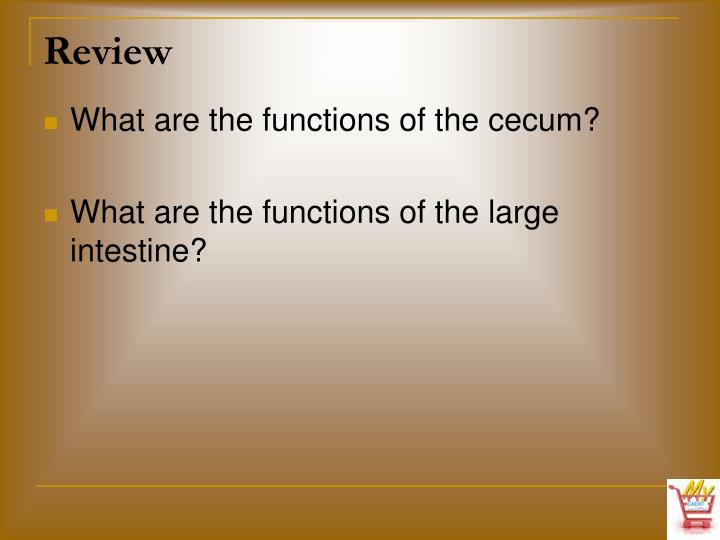 What are the functions of the cecum?