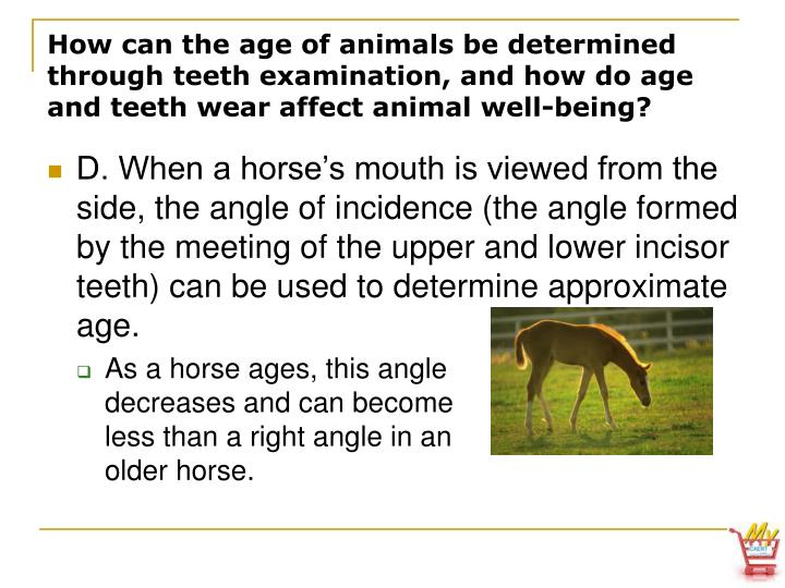 How can the age of animals be determined through teeth examination, and how do age and teeth wear affect animal well-being?