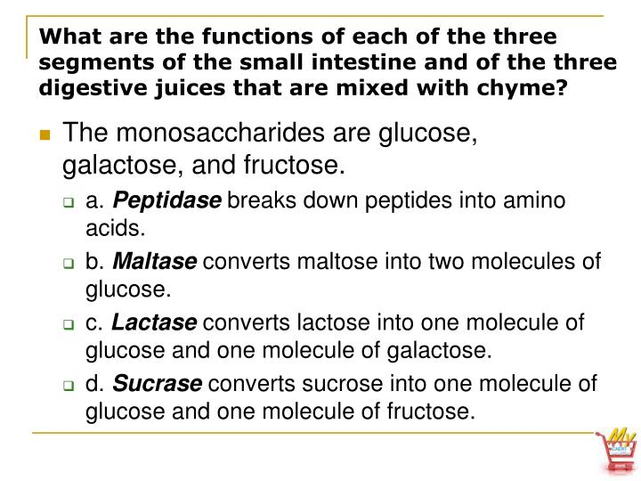 What are the functions of each of the three segments of the small intestine and of the three digestive juices that are mixed with chyme?