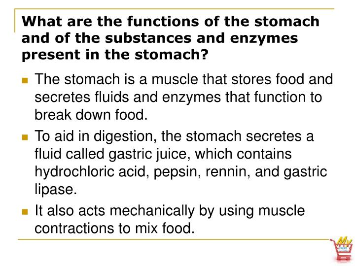What are the functions of the stomach and of the substances and enzymes present in the stomach?