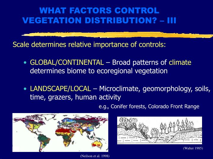 WHAT FACTORS CONTROL VEGETATION DISTRIBUTION? – III
