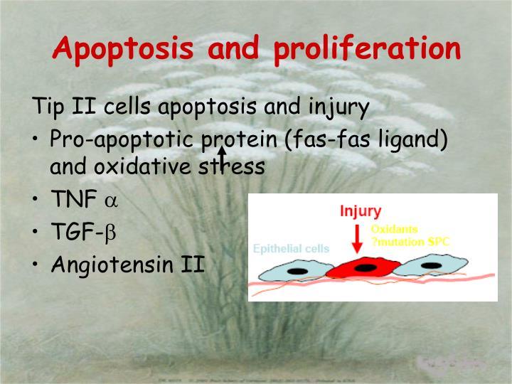 Apoptosis and proliferation