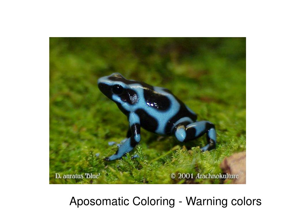 Aposomatic Coloring - Warning colors