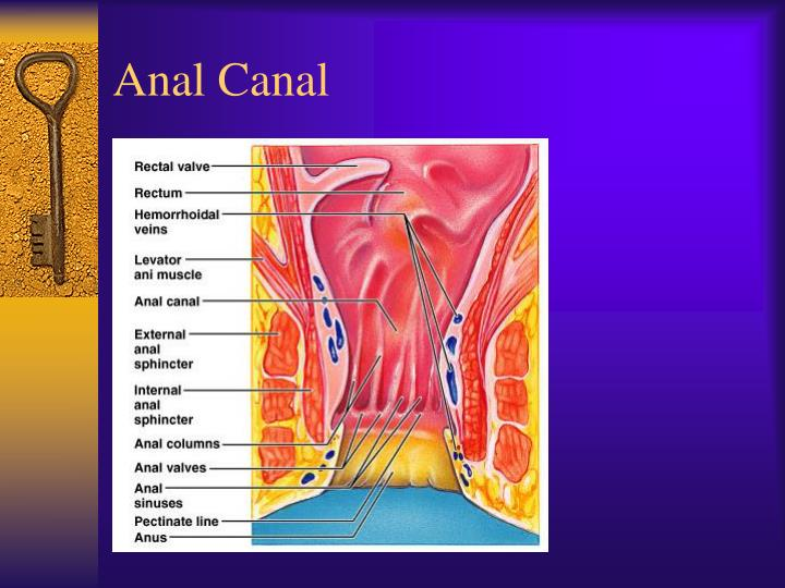 Anal Canal