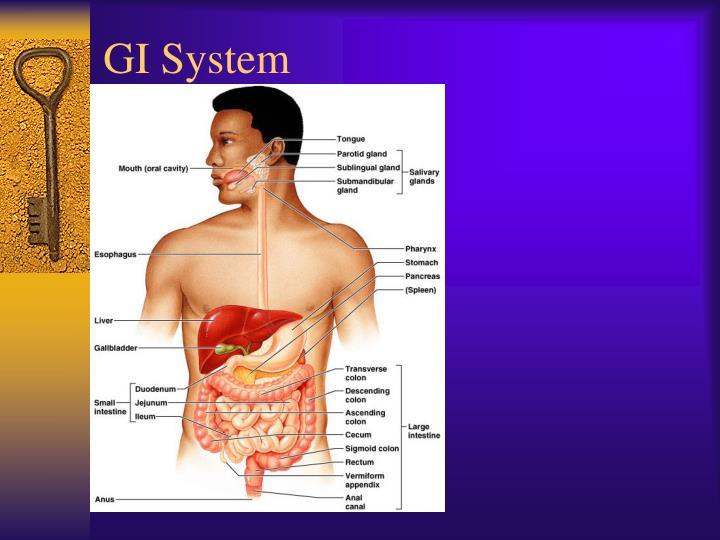 GI System