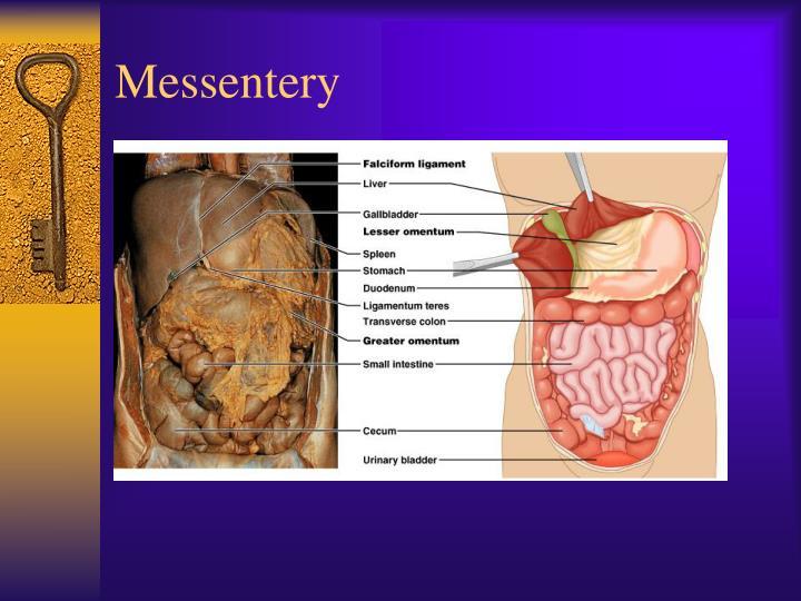 Messentery