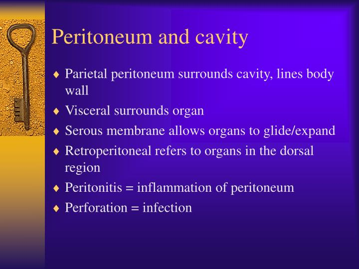 Peritoneum and cavity