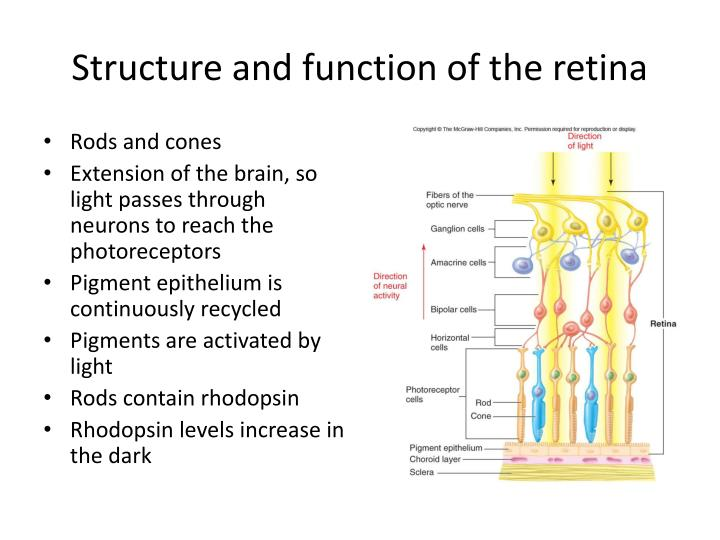 Ppt Sensory Physiology Powerpoint Presentation Id 1377886