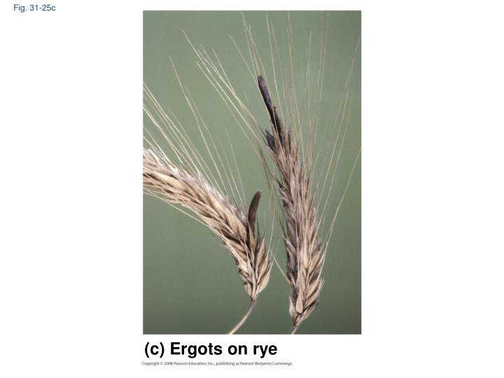 Fig. 31-25c
