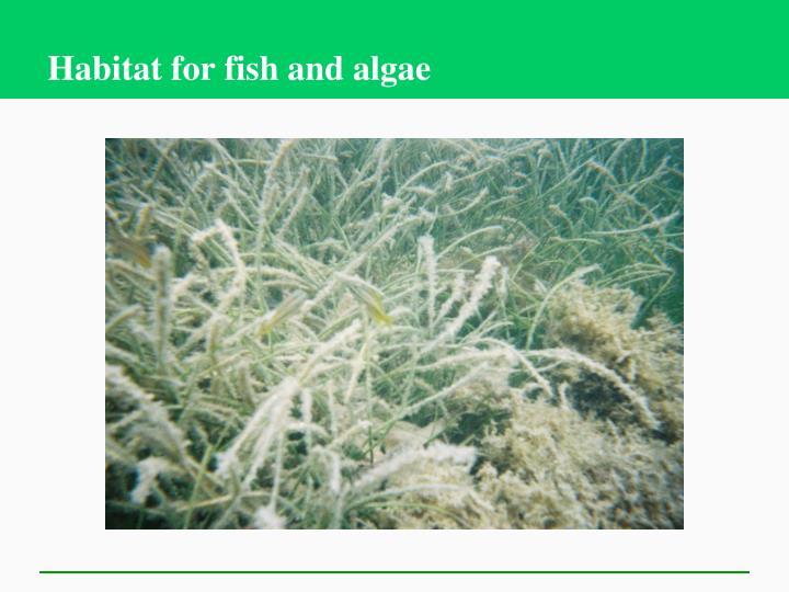 Habitat for fish and algae