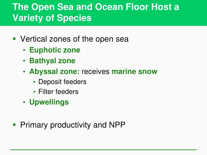 The Open Sea and Ocean Floor Host a Variety of Species