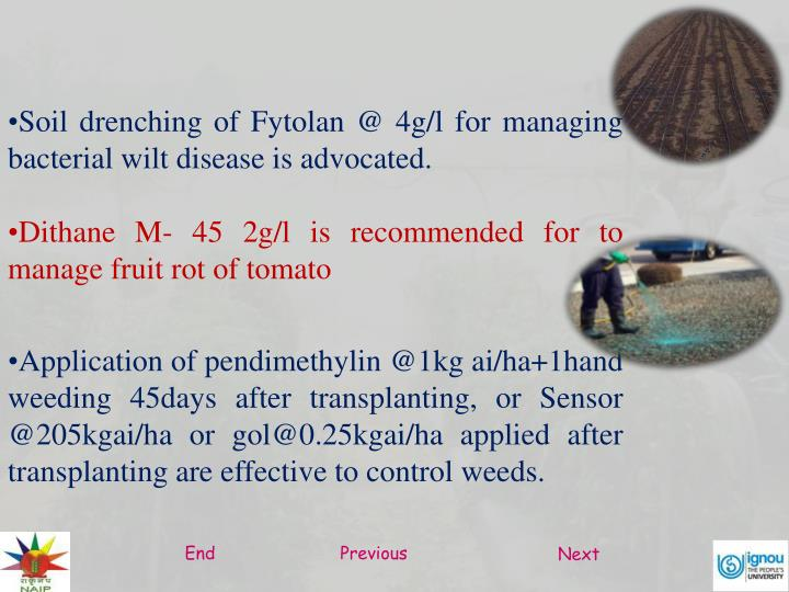 Soil drenching of Fytolan @ 4g/l for managing bacterial wilt disease is advocated.