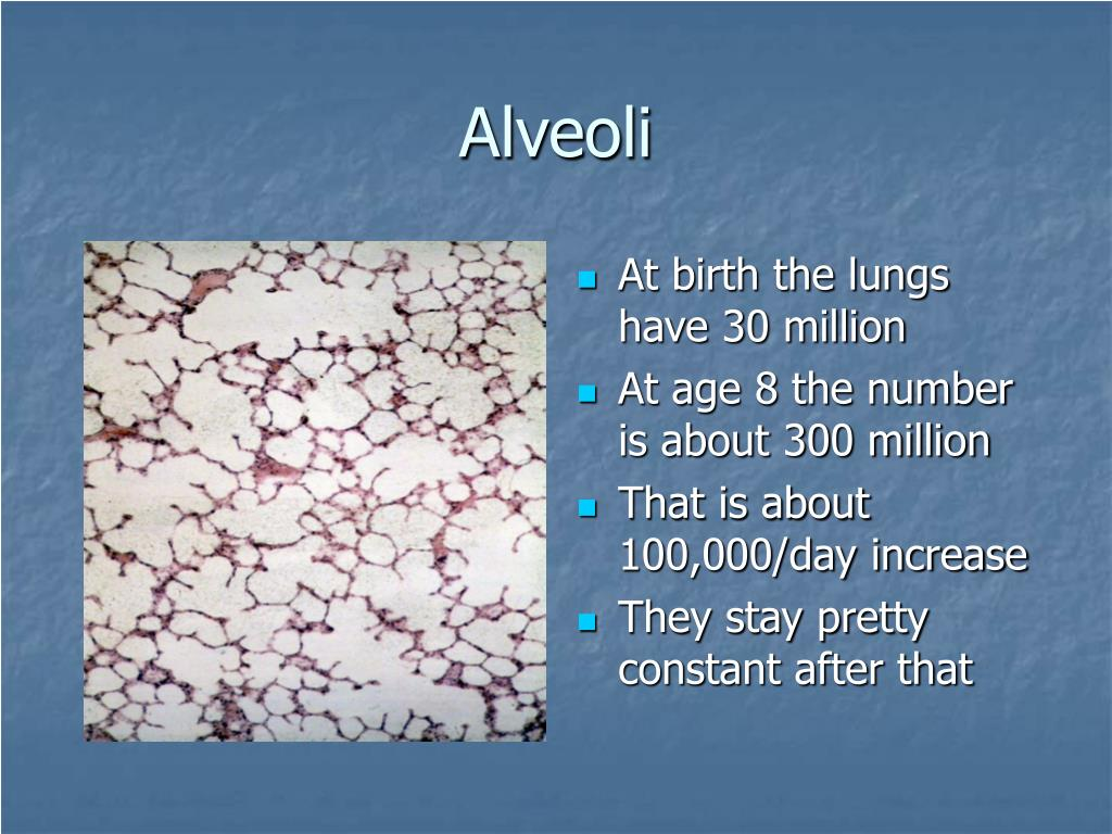 At birth the lungs have 30 million