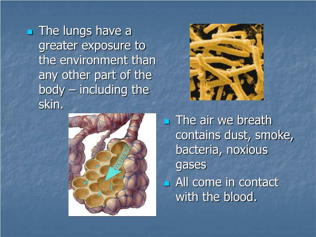 The lungs have a greater exposure to the environment than any other part of the body – including the skin.