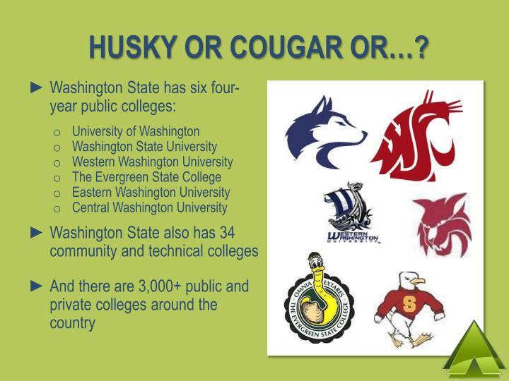 HUSKY OR COUGAR OR…?