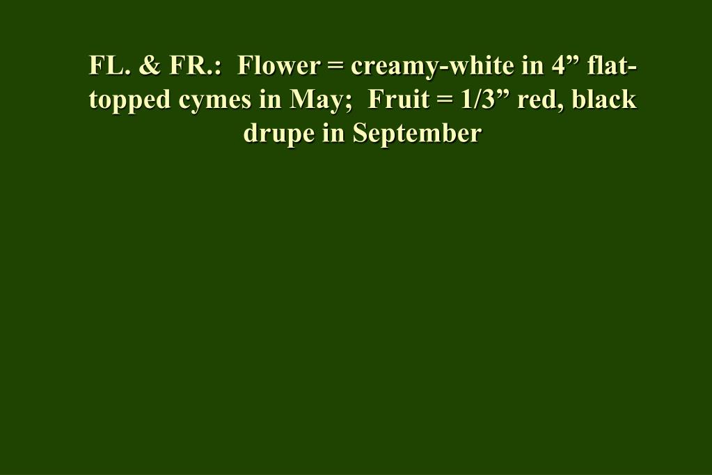 "FL. & FR.:  Flower = creamy-white in 4"" flat-topped cymes in May;  Fruit = 1/3"" red, black drupe in September"