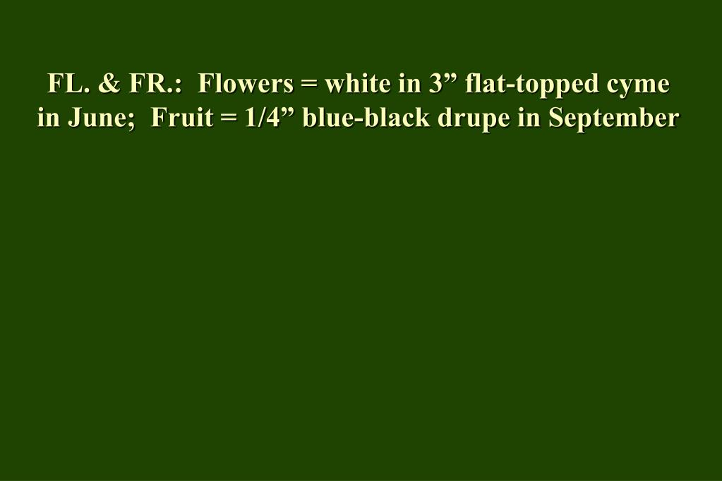 "FL. & FR.:  Flowers = white in 3"" flat-topped cyme in June;  Fruit = 1/4"" blue-black drupe in September"