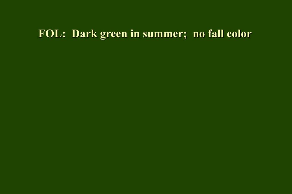 FOL:  Dark green in summer;  no fall color