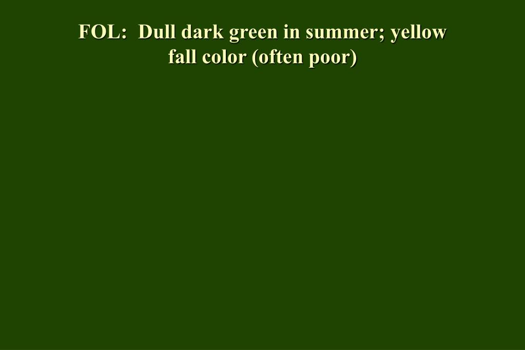 FOL:  Dull dark green in summer; yellow fall color (often poor)