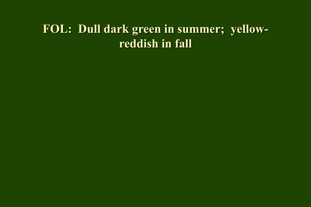 FOL:  Dull dark green in summer;  yellow-reddish in fall