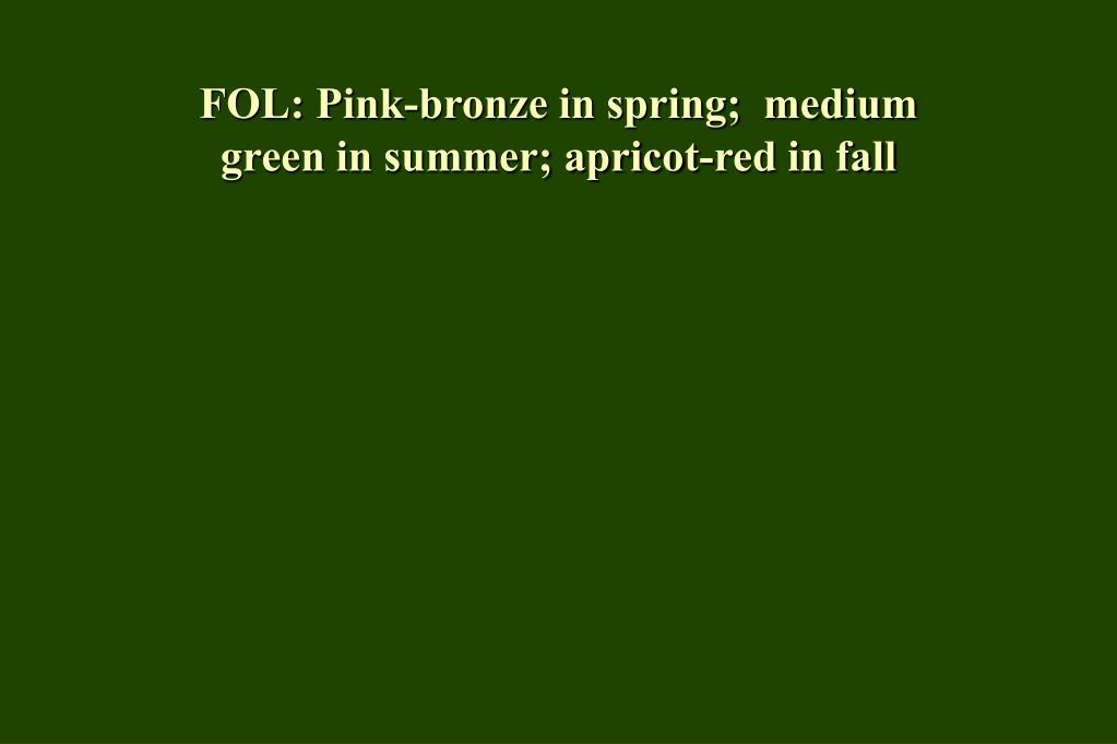 FOL: Pink-bronze in spring;  medium green in summer; apricot-red in fall