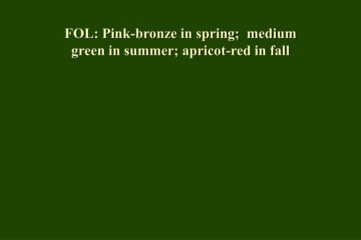 Fol pink bronze in spring medium green in summer apricot red in fall