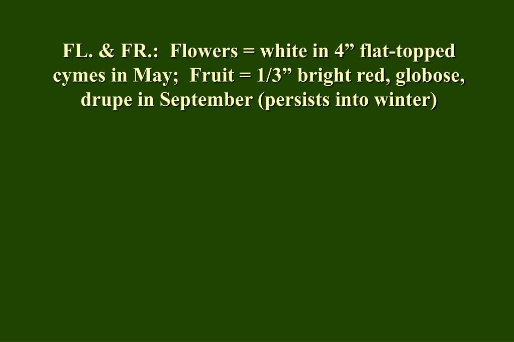 "FL. & FR.:  Flowers = white in 4"" flat-topped cymes in May;  Fruit = 1/3"" bright red, globose, drupe in September (persists into winter)"