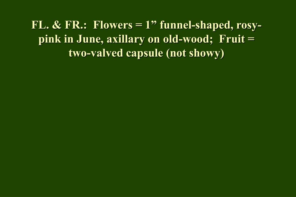 "FL. & FR.:  Flowers = 1"" funnel-shaped, rosy-pink in June, axillary on old-wood;  Fruit = two-valved capsule (not showy)"