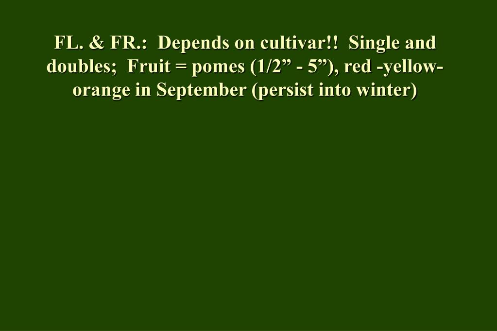"FL. & FR.:  Depends on cultivar!!  Single and doubles;  Fruit = pomes (1/2"" - 5""), red -yellow-orange in September (persist into winter)"